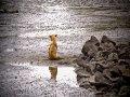 Ultime Notizie: Accordo tra Comune di Cepagatti e Dog Village di Montesilvano per contrastare il randagismo